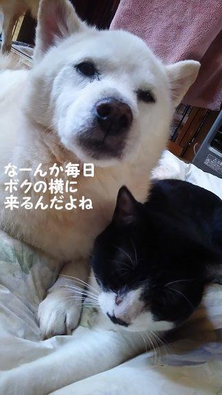 ぶーたんは犬が好きと言うよりも_f0242002_13524093.jpg