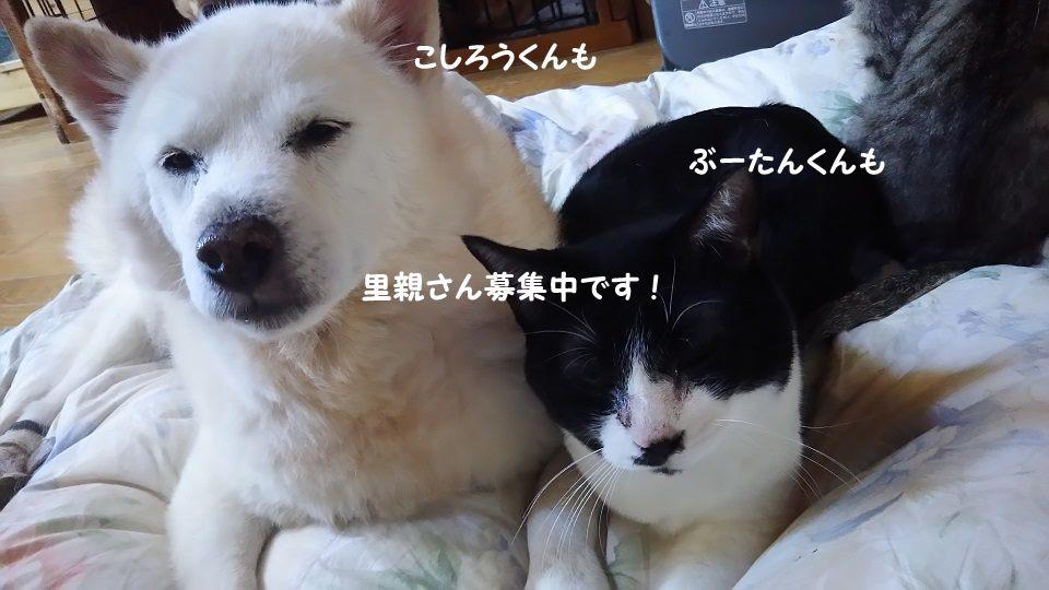 ぶーたんは犬が好きと言うよりも_f0242002_13525043.jpg