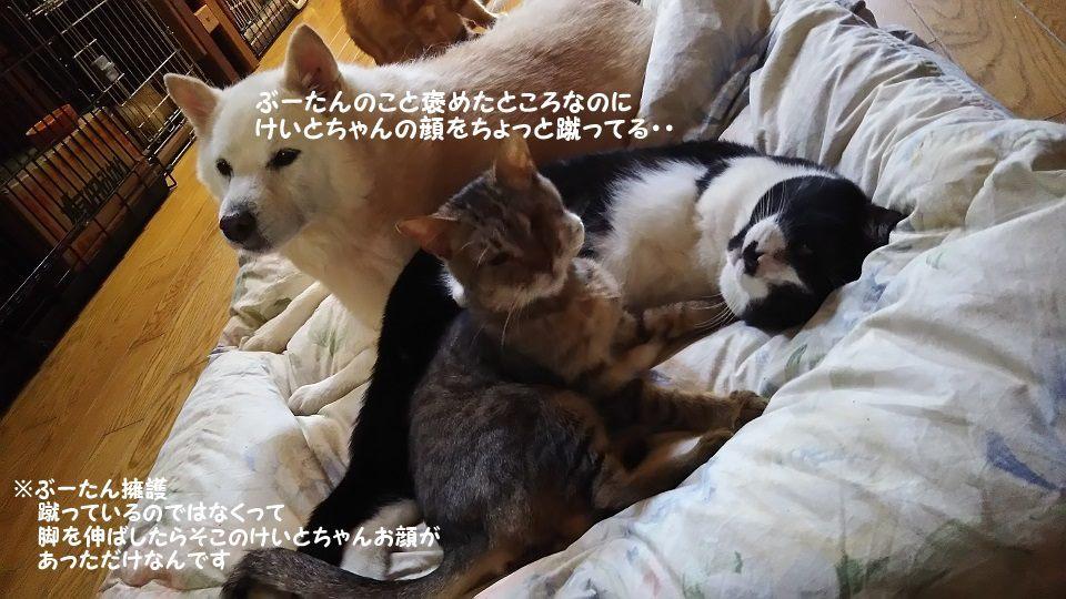 ぶーたんは犬が好きと言うよりも_f0242002_13531607.jpg