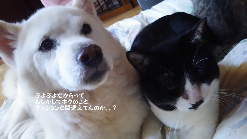 ぶーたんは犬が好きと言うよりも_f0242002_13542741.jpg