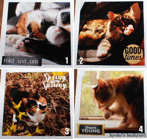 うち猫カレンダー2017(動物・ペット部門)_b0253205_04380395.jpg