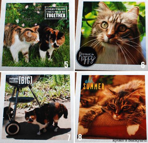 うち猫カレンダー2017(動物・ペット部門)_b0253205_04383904.jpg