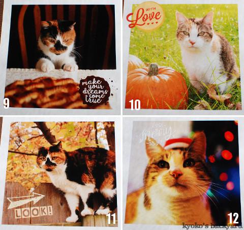 うち猫カレンダー2017(動物・ペット部門)_b0253205_04392511.jpg