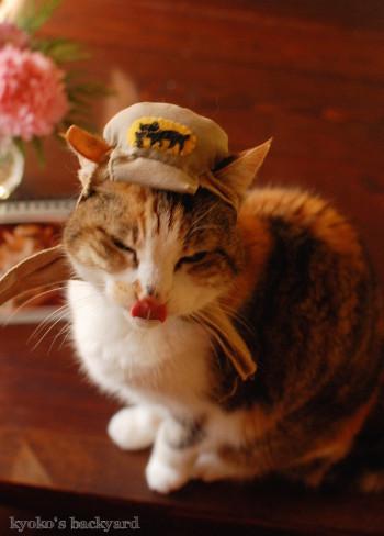 うち猫カレンダー2017(動物・ペット部門)_b0253205_04403305.jpg