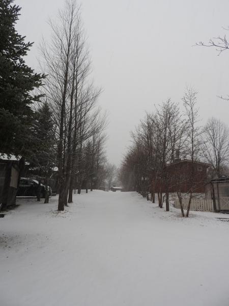 雪が降っています_b0174425_18124891.jpg