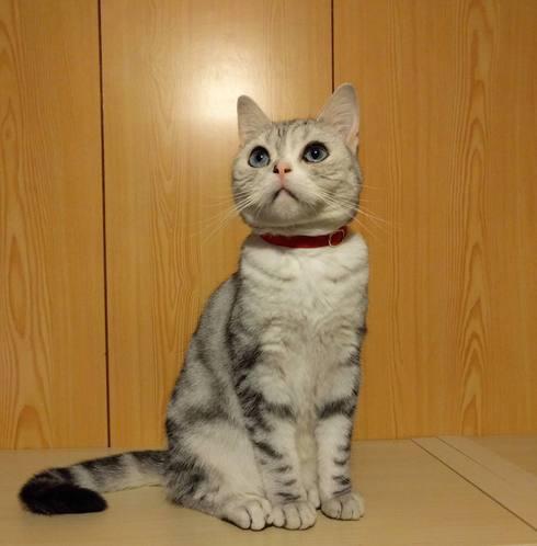 迷い猫ゆきちゃんの話7_a0265743_005890.jpg