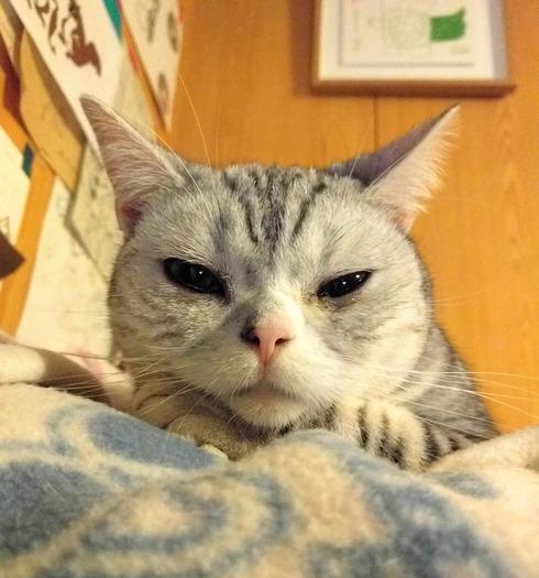 迷い猫ゆきちゃんの話7_a0265743_011026.jpg