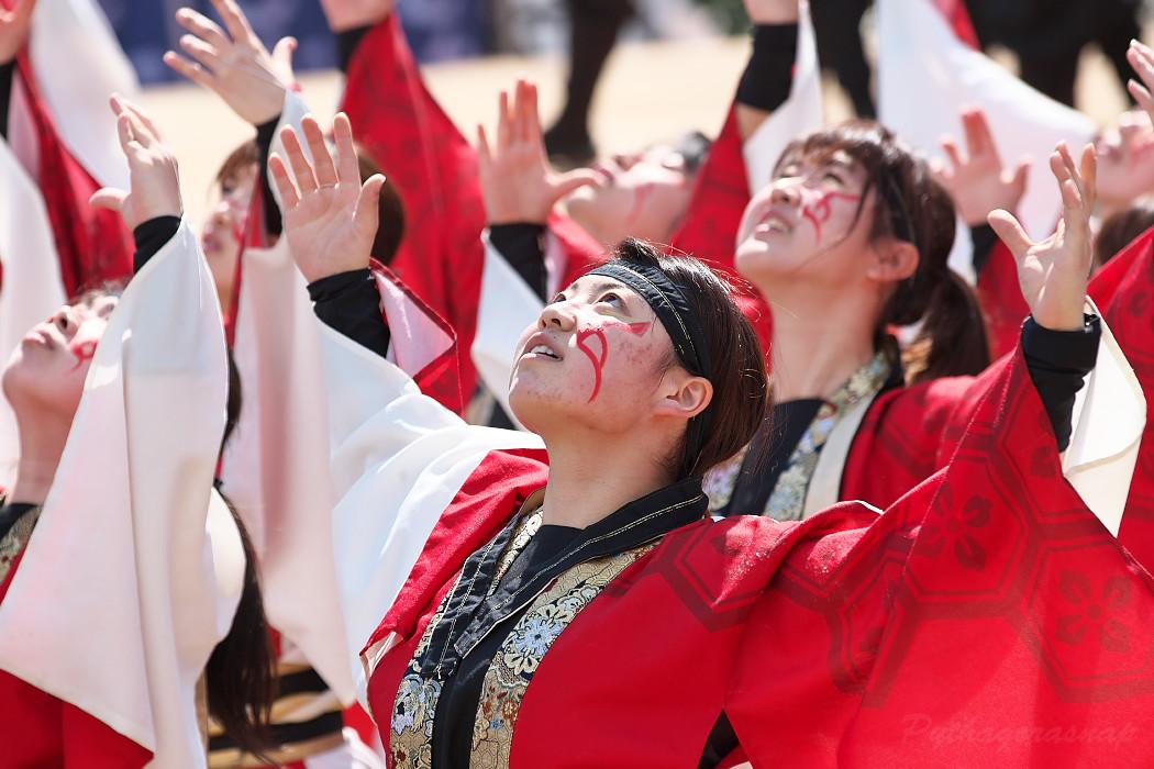 """早稲田大学""""踊り侍"""" @ がんこ祭(浜よさ)2016_c0187584_12281679.jpg"""