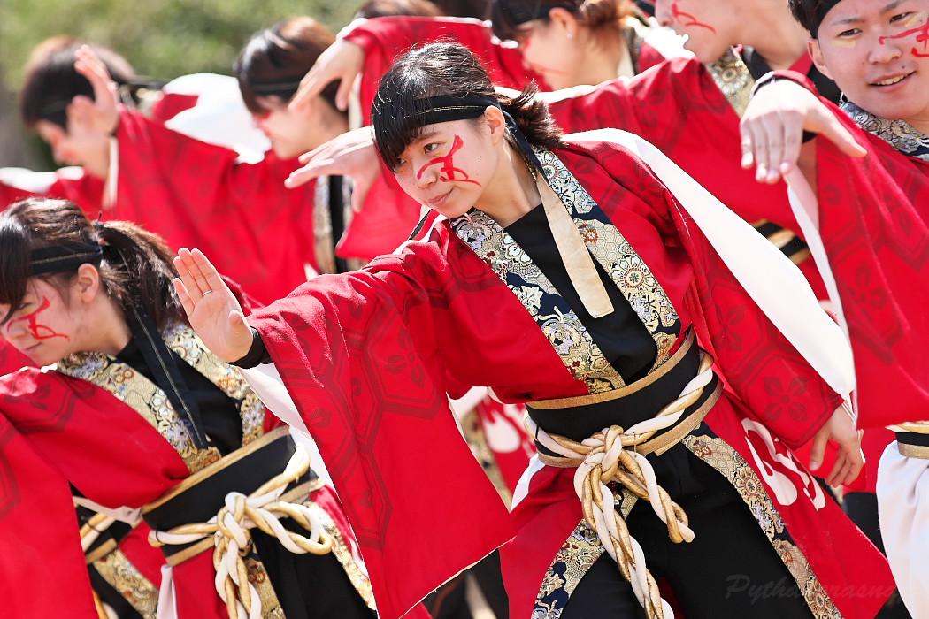 """早稲田大学""""踊り侍"""" @ がんこ祭(浜よさ)2016_c0187584_12282412.jpg"""