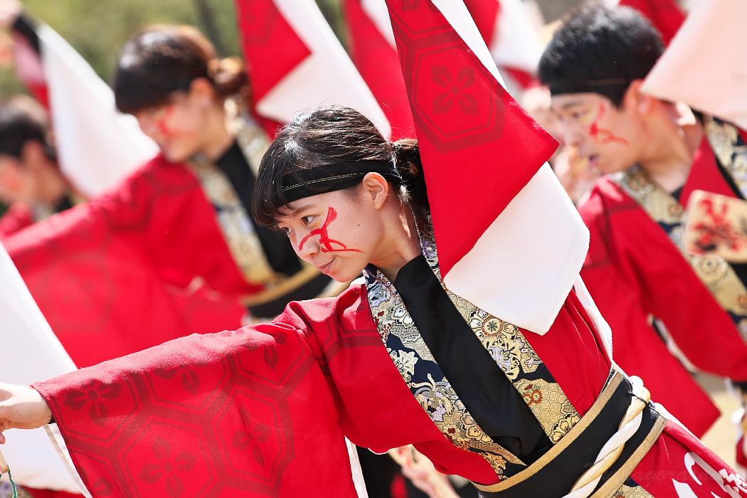 """早稲田大学""""踊り侍"""" @ がんこ祭(浜よさ)2016_c0187584_12291724.jpg"""