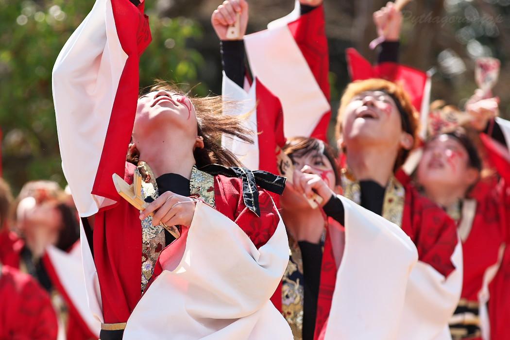"""早稲田大学""""踊り侍"""" @ がんこ祭(浜よさ)2016_c0187584_1230781.jpg"""