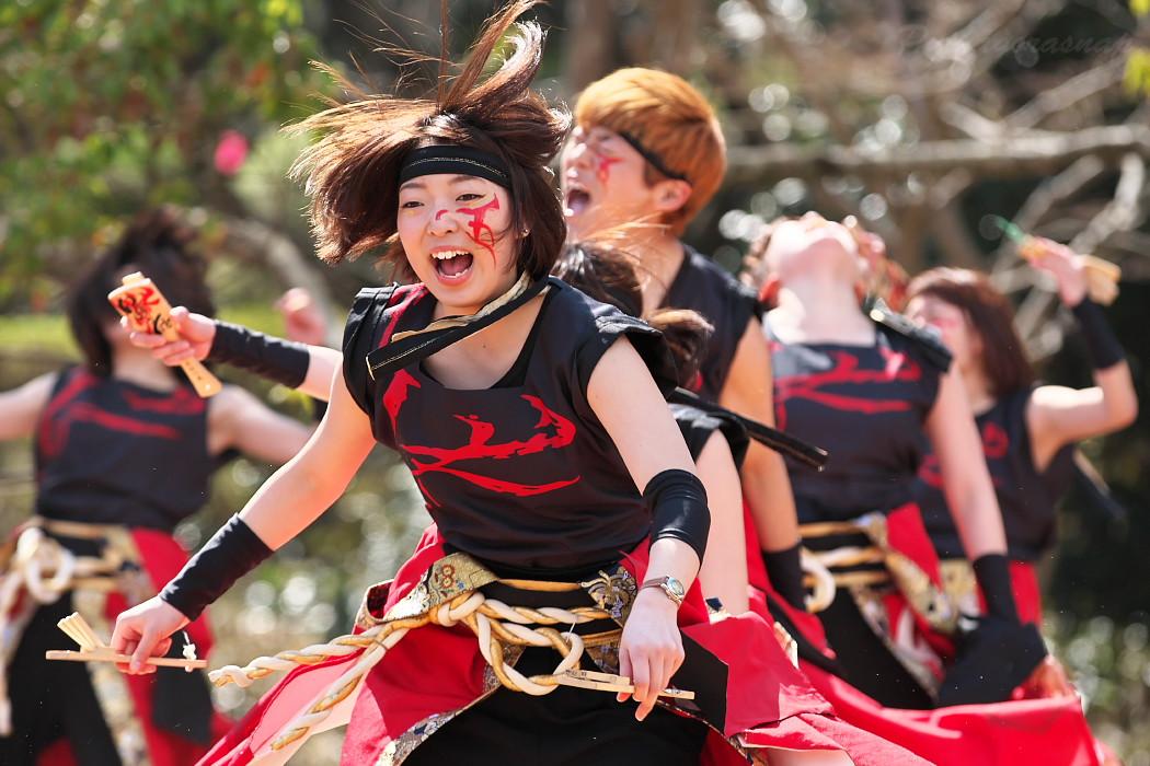 """早稲田大学""""踊り侍"""" @ がんこ祭(浜よさ)2016_c0187584_12311013.jpg"""