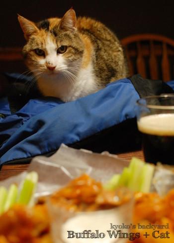 バッファローウィングを見せたら。おもしろ猫ブラシ (動物・ペット部門)_b0253205_04592164.jpg