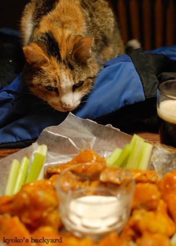 バッファローウィングを見せたら。おもしろ猫ブラシ (動物・ペット部門)_b0253205_05005803.jpg