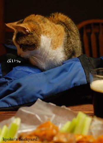 バッファローウィングを見せたら。おもしろ猫ブラシ (動物・ペット部門)_b0253205_05021793.jpg
