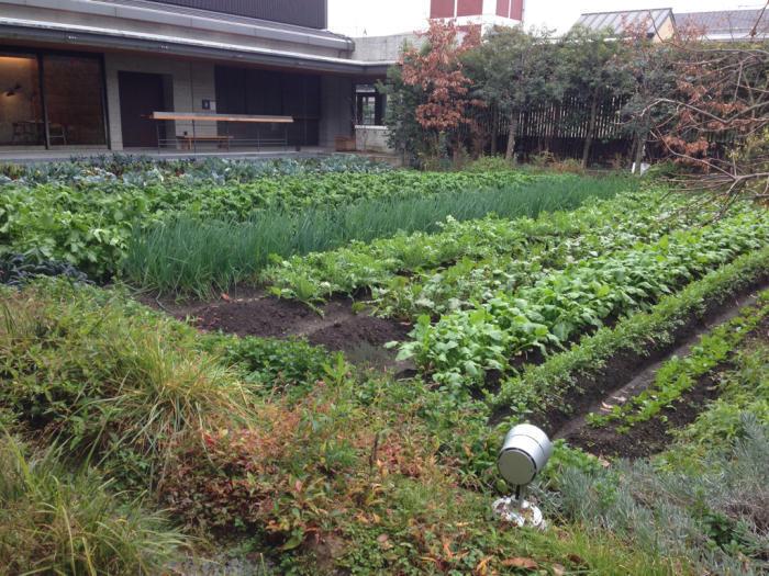 わが家のカリフラワーと京都八百一セイボリーさん京野菜のフレンチ_f0155431_21085626.jpg