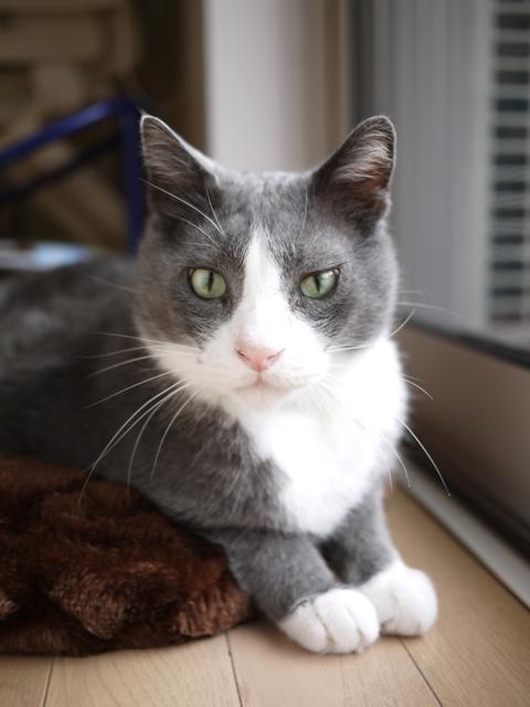 猫のお留守番 カン太くん編。_a0143140_22384393.jpg