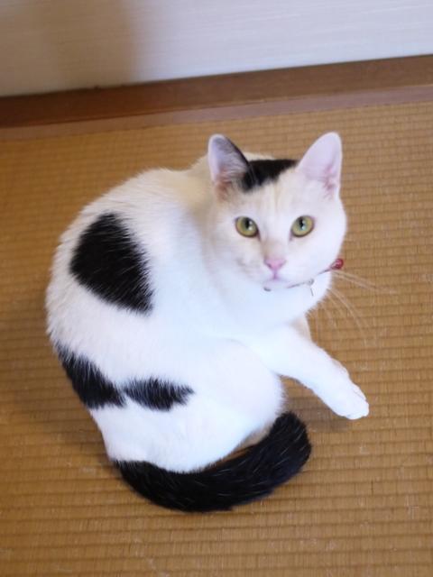 猫のお留守番 たらくん編。_a0143140_22493173.jpg