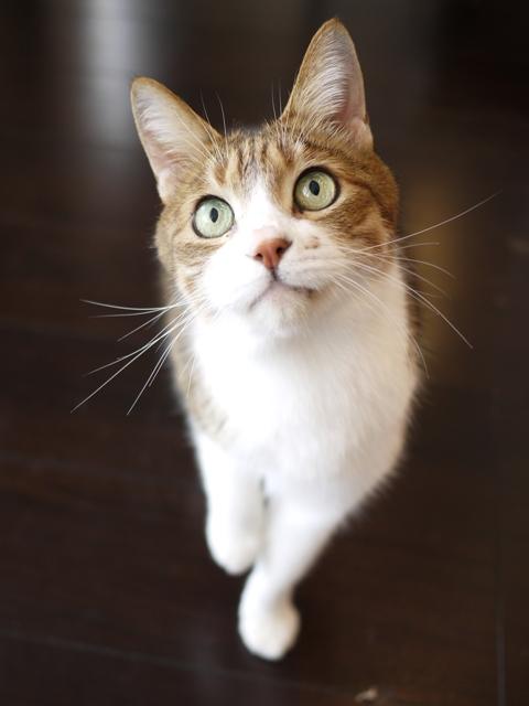 猫のお留守番 ウィンクくん編。_a0143140_22543541.jpg