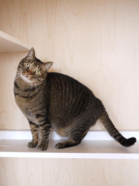 猫のお留守番 ララちゃん編。_a0143140_225935100.jpg