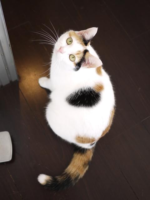猫のお留守番 エンジェルちゃん編。_a0143140_23113960.jpg