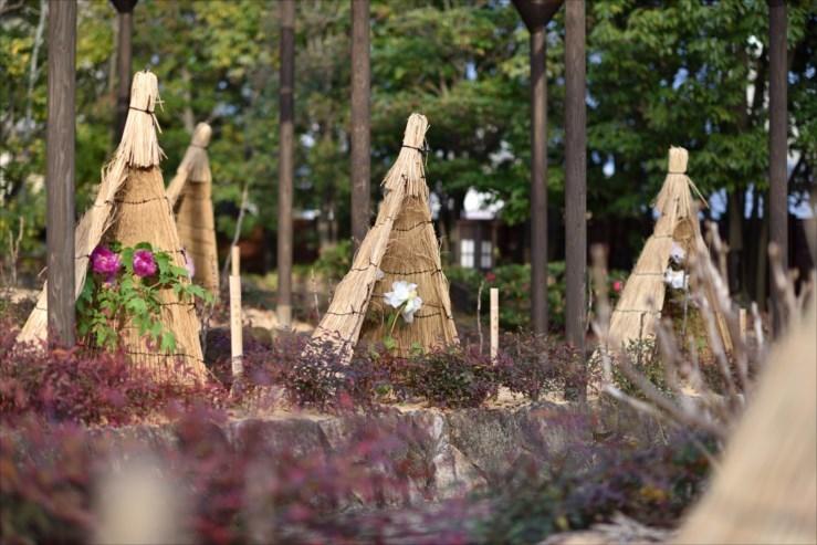 徳川園の松飾りと冬牡丹_e0170058_19065935.jpg