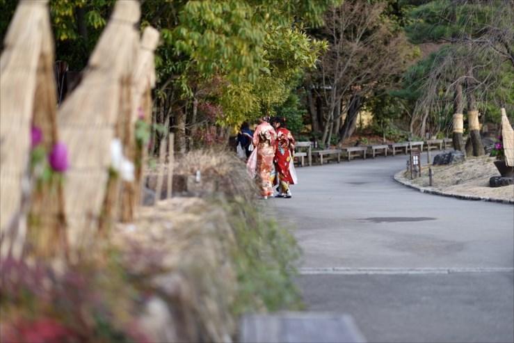 徳川園の松飾りと冬牡丹_e0170058_19065949.jpg