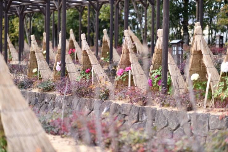 徳川園の松飾りと冬牡丹_e0170058_19070072.jpg