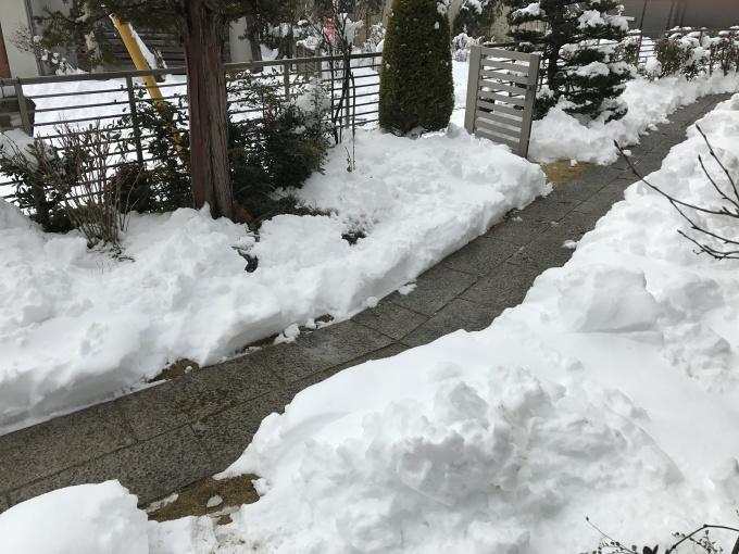 雪が降りました❄️_f0303858_10324339.jpg