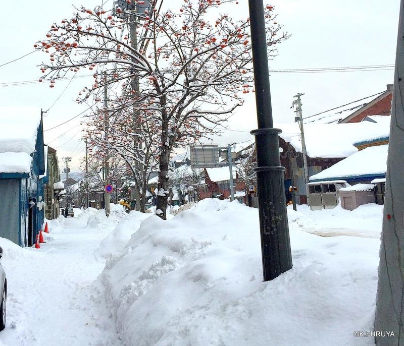 雪の北海道 2  小樽へ_a0092659_21270168.jpg