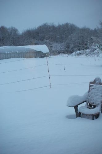 積雪25cm。そり遊び。_c0110869_11363842.jpg