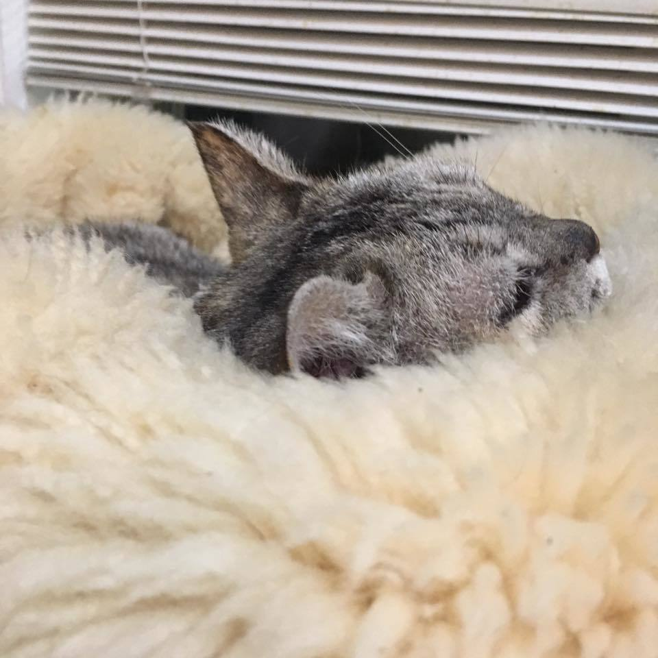I\'m buried in sheep♡_b0195783_10590750.jpg