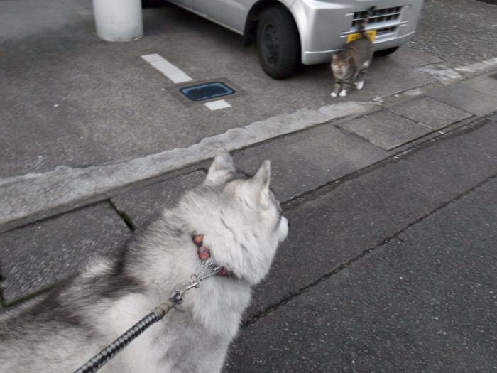 ネコを求めて三千里(≧∇≦)_c0049299_22425744.jpg