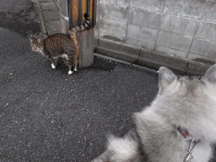 ネコを求めて三千里(≧∇≦)_c0049299_22440000.jpg