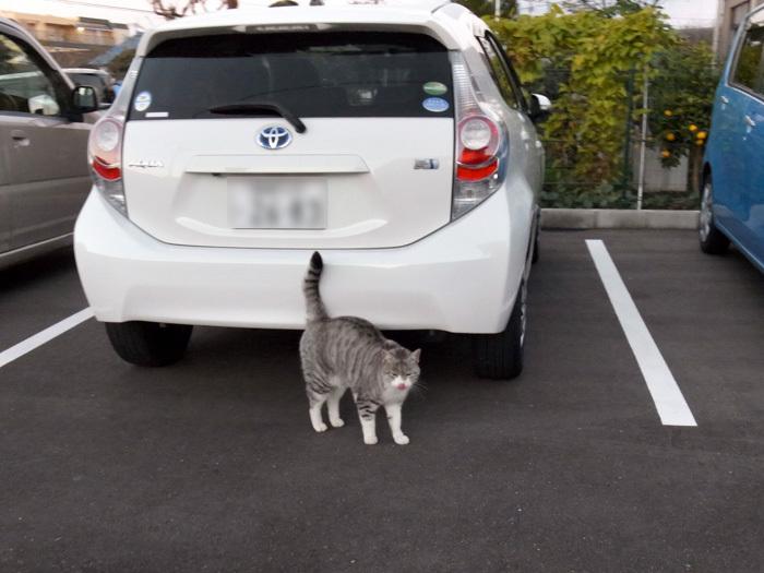 ネコを求めて三千里(≧∇≦)_c0049299_22470557.jpg