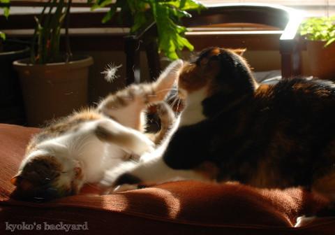 姉妹喧嘩 2  (動物・ペット部門)_b0253205_04554268.jpg