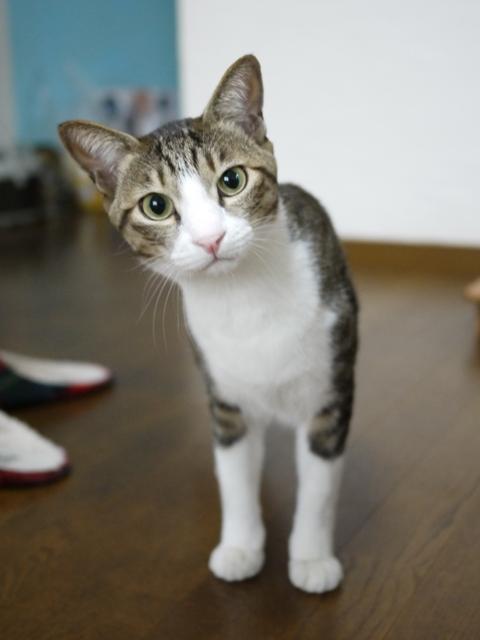 猫のお留守番 たんたんくん編。_a0143140_20401115.jpg