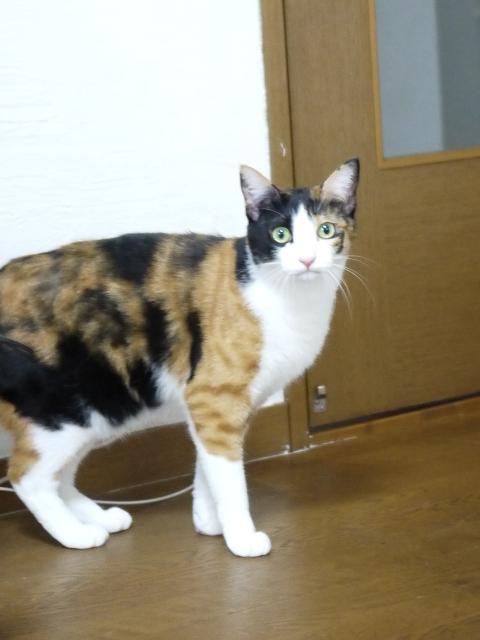 猫のお留守番 みーたんちゃん編。_a0143140_2050015.jpg