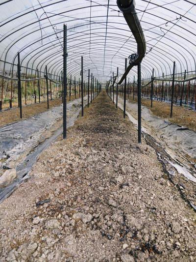 「なごみの里の朝採り『グリーンアスパラ』」 不要な葉っぱや種を焼き払って元気なアスパラを育てます!_a0254656_1754151.jpg