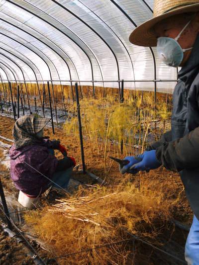 「なごみの里の朝採り『グリーンアスパラ』」 不要な葉っぱや種を焼き払って元気なアスパラを育てます!_a0254656_18115852.jpg