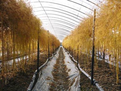 「なごみの里の朝採り『グリーンアスパラ』」 不要な葉っぱや種を焼き払って元気なアスパラを育てます!_a0254656_1851640.jpg