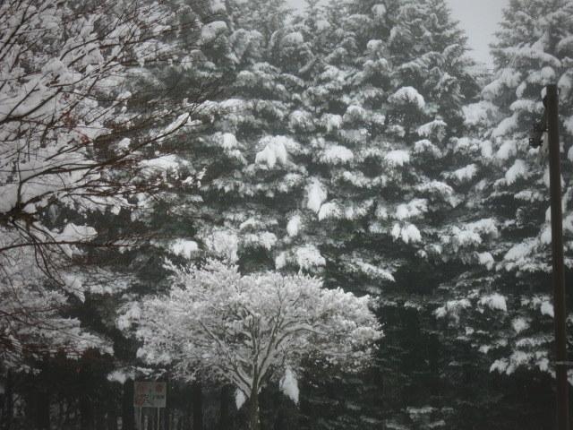 ようやく冬らしい景色に♪_f0236260_01422982.jpg