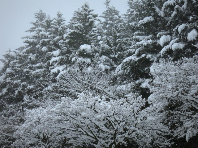 ようやく冬らしい景色に♪_f0236260_01424730.jpg
