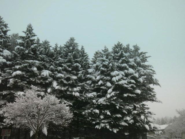 ようやく冬らしい景色に♪_f0236260_01430267.jpg
