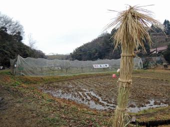 稲田堤の家の近くで「どんと焼き」_c0195909_1515912.jpg
