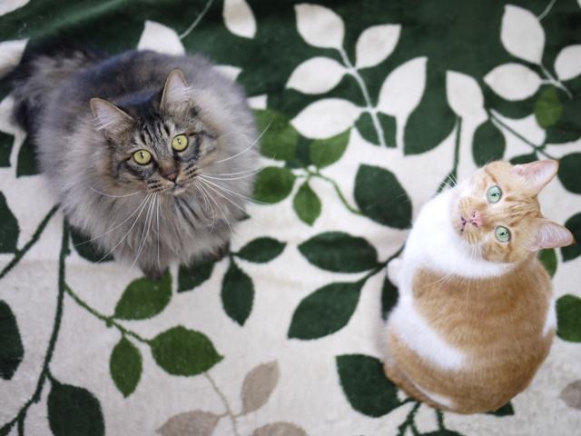 猫のお留守番 喜助くん諭吉くん編。_a0143140_21215430.jpg