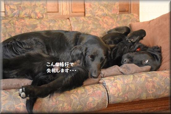 f0363141_8531978.jpg