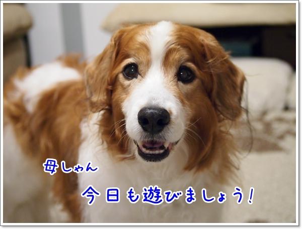 d0013149_00101418.jpg
