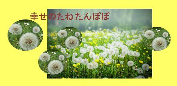幻の赤大豆~最終収穫_b0270977_16204816.jpg