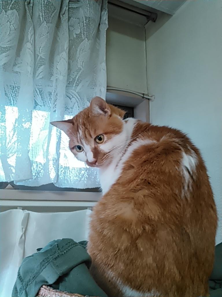【猫】振り返って_f0141609_09354625.jpg